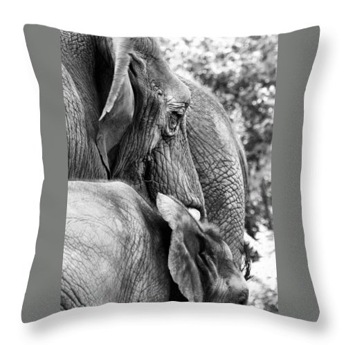 African Elephant Throw Pillow featuring the photograph Elephant Ears by Angela Rath