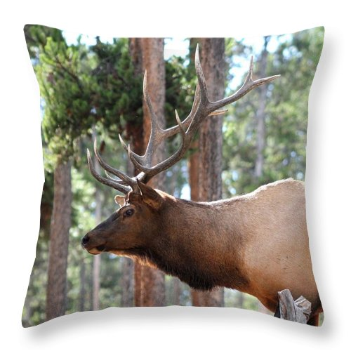 Elk Throw Pillow featuring the photograph Elk Profile 2 Square by David Dunham