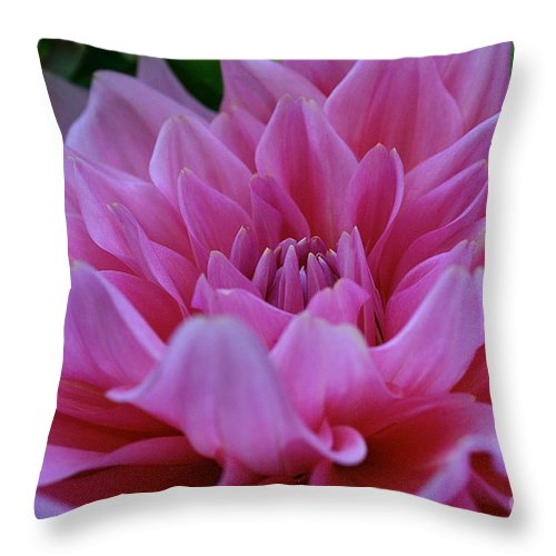 Outdoors Throw Pillow featuring the photograph Emory Paul Dahlia by Susan Herber