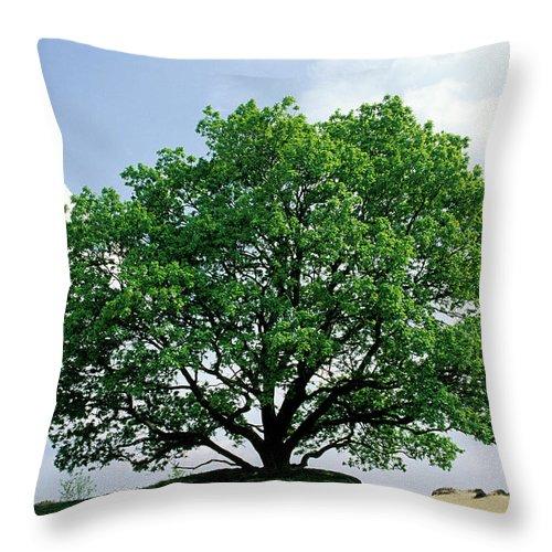Fn Throw Pillow featuring the photograph English Oak Quercus Robur In Spring by Flip De Nooyer