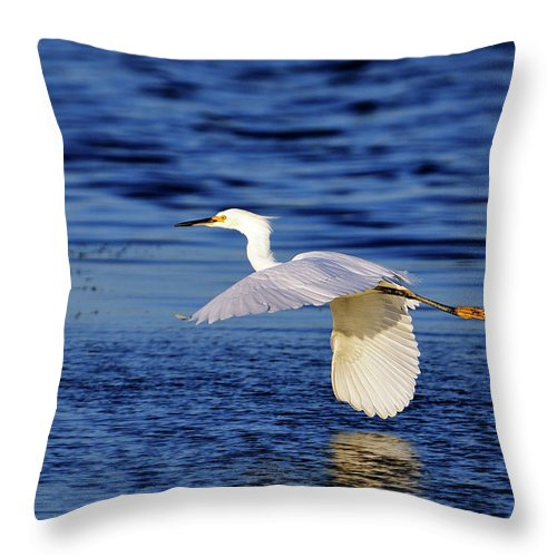 Snowy Throw Pillow featuring the photograph Evening Flight by Bill Dodsworth