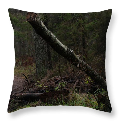 Autumn Throw Pillow featuring the photograph Evening In A Pine Forest by Michael Goyberg