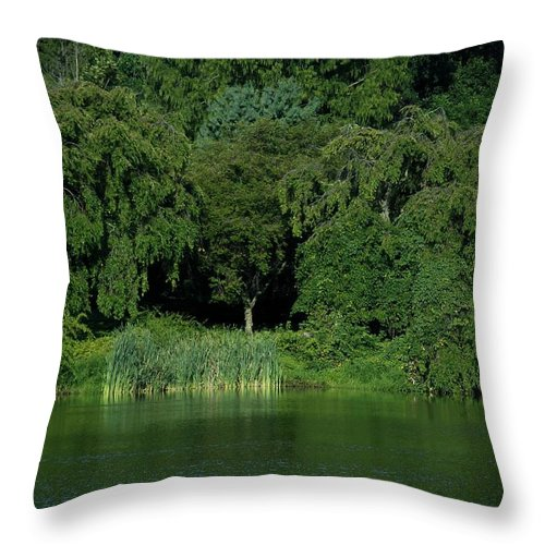 Growing Throw Pillow featuring the photograph Everywhere And Nowhere - Holmdel Park by Angie Tirado