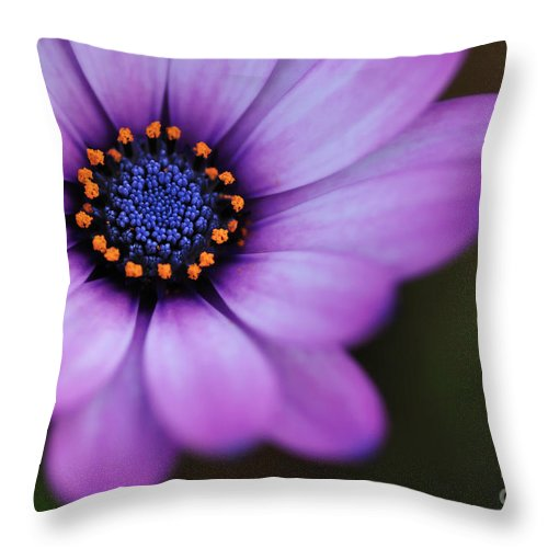 Photography Throw Pillow featuring the photograph Eye Of The Daisy by Kaye Menner