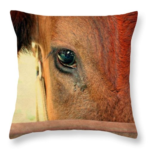 Cow Throw Pillow featuring the photograph Eye To Eye by Jo Sheehan