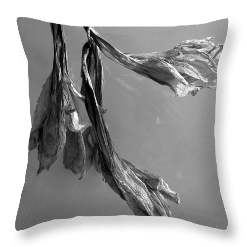 Flowers. Dead Flowers Throw Pillow featuring the photograph Faded by Barry Doherty