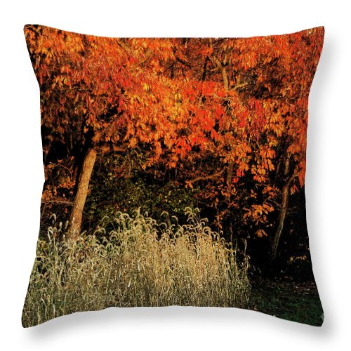 Fall Color Orange Grass Leaves Sunlight Evening Light Throw Pillow featuring the photograph Fall Colors 2 by Vilas Malankar