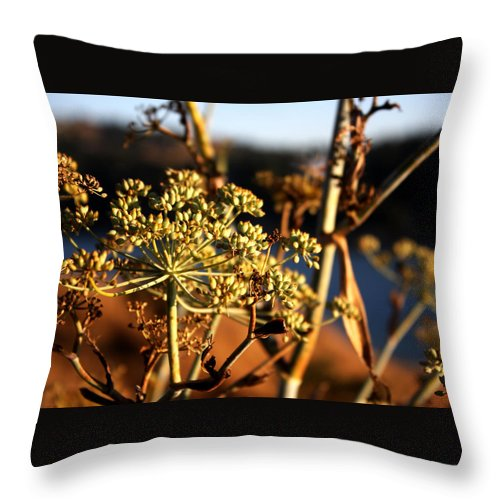Wildflowers Throw Pillow featuring the photograph Fall Flowers by Leonard Sharp