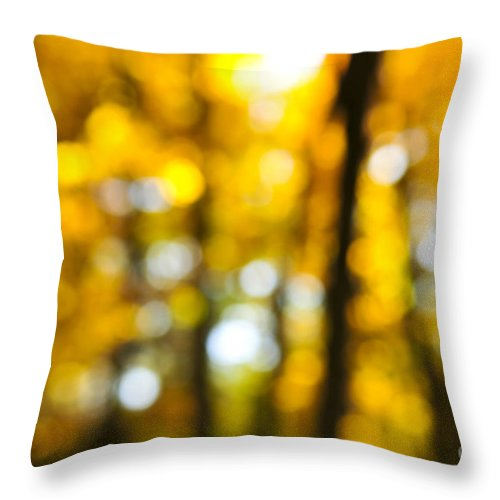 Nature Throw Pillow featuring the photograph Fall Forest In Sunshine by Elena Elisseeva