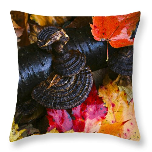 Grasses & Leaves Throw Pillow featuring the photograph Fall Fungi by Barbara Northrup