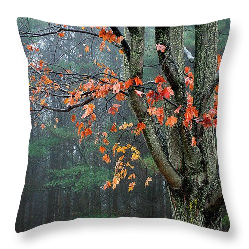 Fall Throw Pillow featuring the photograph Fall In Your Face by Burney Lieberman
