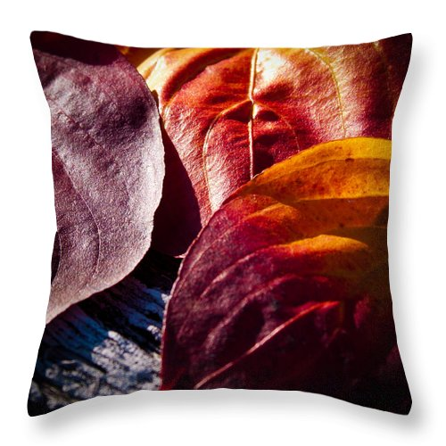 Leaves Throw Pillow featuring the photograph Fall Leaves by David Patterson