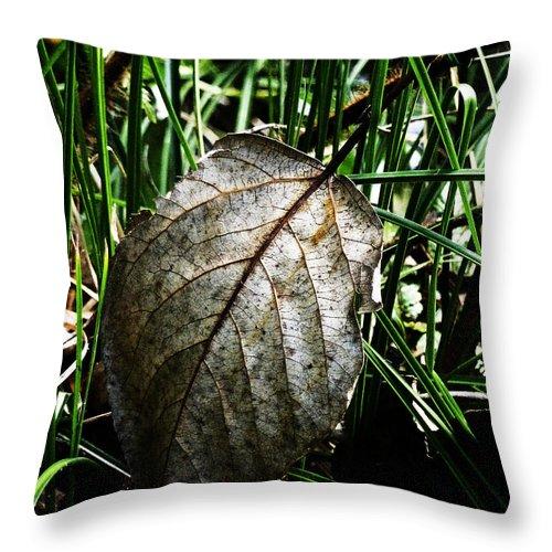 Fallen Throw Pillow featuring the photograph Fallen But Proud by Steve Taylor