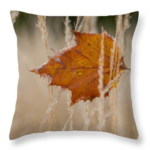 Autumn Throw Pillow featuring the photograph Fallen Color by Keith Allen