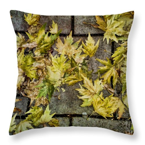 Fall Throw Pillow featuring the photograph Fallen by Heather Applegate