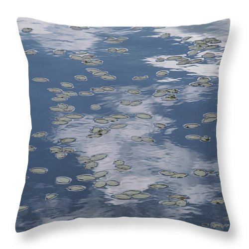 North America Throw Pillow featuring the photograph Fallen Leaves And Reflections Of Clouds by Annie Griffiths