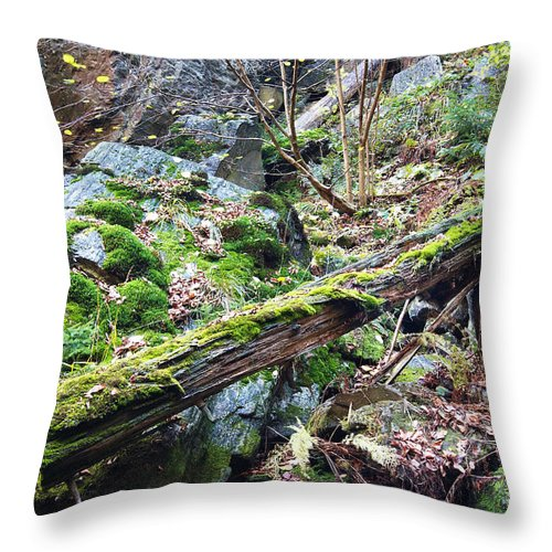 Forest Throw Pillow featuring the photograph Fallen Tree by Michal Boubin
