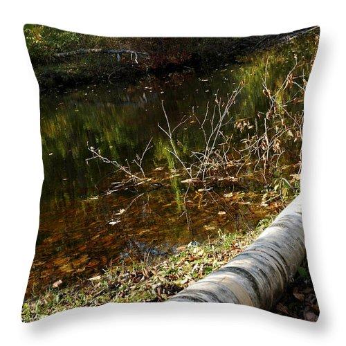 Usa Throw Pillow featuring the photograph Fallen Tree Path by LeeAnn McLaneGoetz McLaneGoetzStudioLLCcom