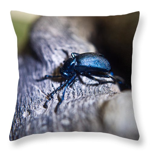 Insecta Throw Pillow featuring the photograph False Darkling Beetle 30 by Douglas Barnett