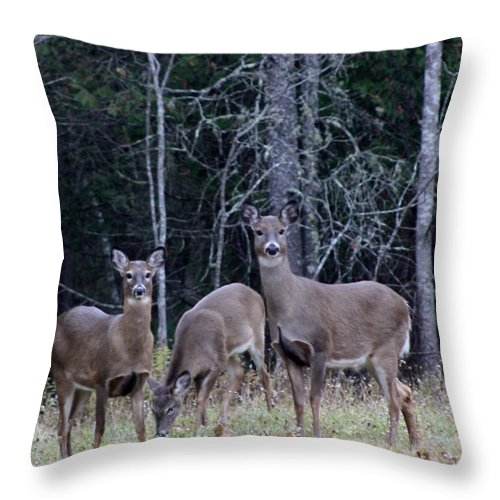 Deer Throw Pillow featuring the photograph Family Portrait by Greg DeBeck