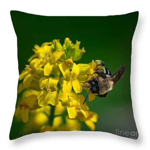 Bee Throw Pillow featuring the photograph Fanfare For The Common Bumblebee by Lois Bryan
