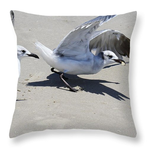 Larus Atricilla Throw Pillow featuring the photograph Faster Than The Other Guy by Roena King
