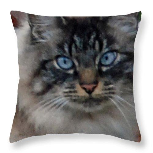 Cat Throw Pillow featuring the photograph Fat Cats Of Ballard 9 by Carol Eliassen