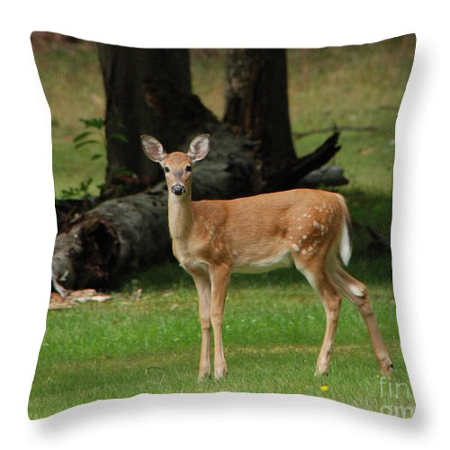 Deer Throw Pillow featuring the photograph Fawn by Grace Grogan