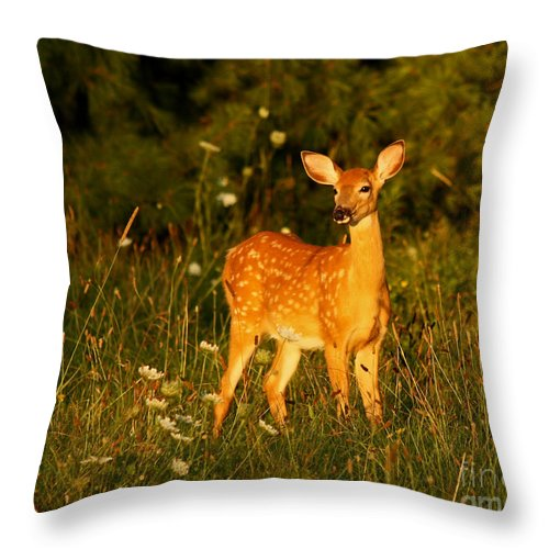 Fawn In Forest At Dusk Throw Pillow featuring the photograph Fawn In Forest At Dusk by Inspired Nature Photography Fine Art Photography