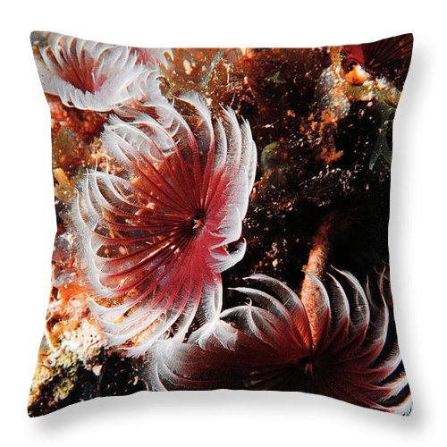 Underwater Throw Pillow featuring the photograph Feeding Feather Dusters by Mike Nellums
