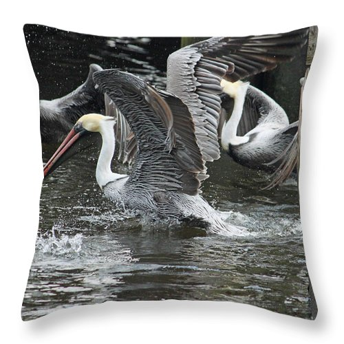 Pelican Throw Pillow featuring the photograph Feeding Frenzy by Suzanne Gaff