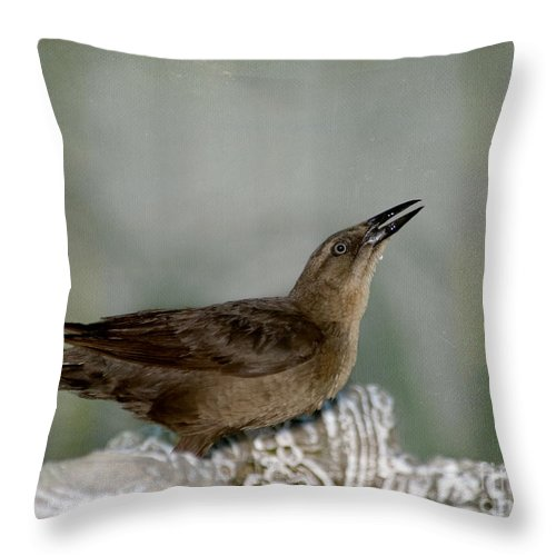 Great-tailed Grackle Throw Pillow featuring the photograph Female Boat Tailed Grackle by Betty LaRue