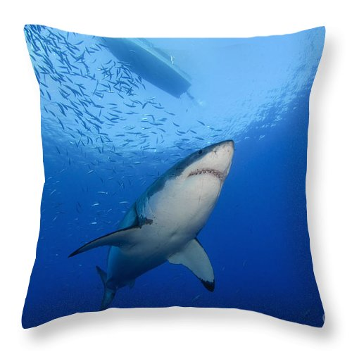 Carcharodon Carcharias Throw Pillow featuring the photograph Female Great White, Guadalupe Island by Todd Winner
