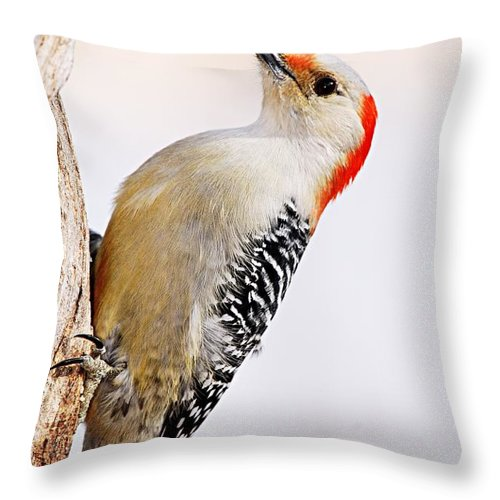Photography Throw Pillow featuring the photograph Female Red-bellied Woodpecker 2 by Larry Ricker