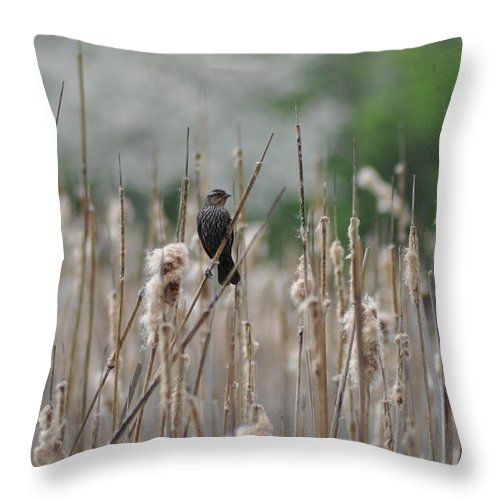 Female Redwinged Blackbird Throw Pillow featuring the photograph Female Redwinged Blackbird by Bill Cannon