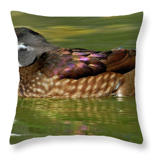 Female Wood Duck Throw Pillow featuring the photograph Female Wood Duck by Dave Mills