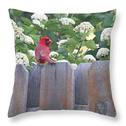 Cardinal Throw Pillow featuring the photograph Fence Top by Elizabeth Winter