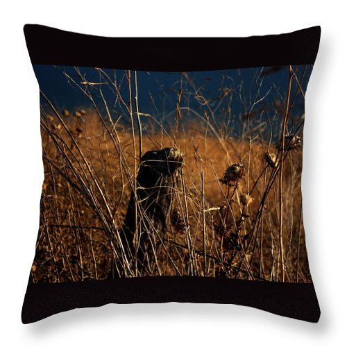 Fall Throw Pillow featuring the photograph Fencepost And Thistles by Leonard Sharp