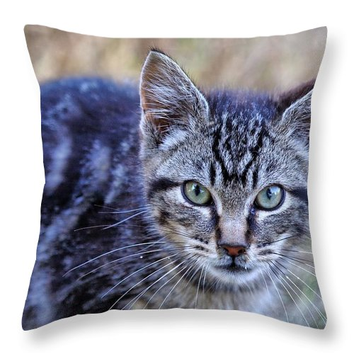 Tabby Throw Pillow featuring the photograph Feral Kitten by Chriss Pagani