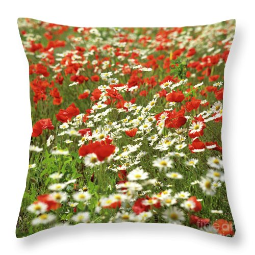 Outdoors Throw Pillow featuring the photograph Field Of Daisies And Poppies. by Bernard Jaubert