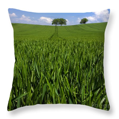 Wheat Throw Pillow featuring the photograph Field Of Wheat. Auvergne. France. Europe by Bernard Jaubert