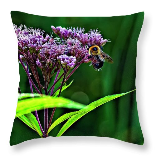 Weed Throw Pillow featuring the photograph Field Worker by Steve Harrington