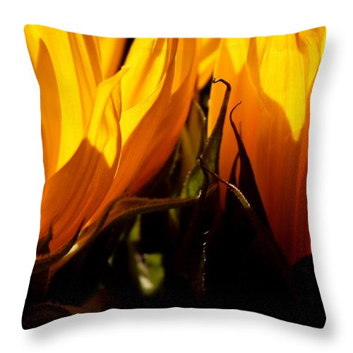 Fiery Throw Pillow featuring the photograph Fiery Sunflowers by Kume Bryant