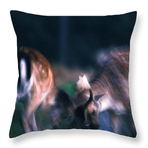 Animal Throw Pillow featuring the photograph Fighting Fallow Deer by Ulrich Kunst And Bettina Scheidulin