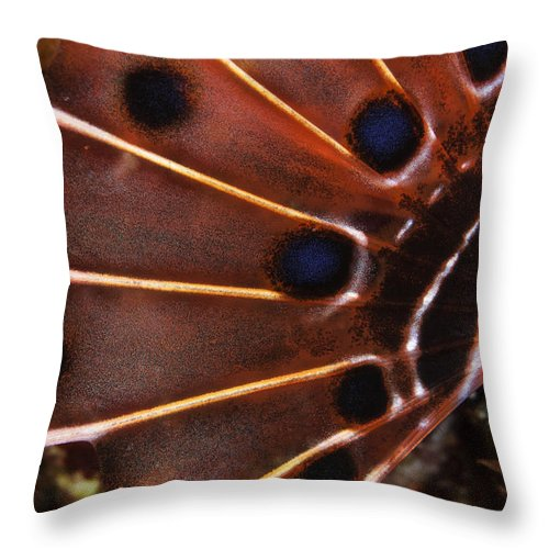 Ocean Throw Pillow featuring the photograph Fin Of A Scorpionfish, Indonesia by Todd Winner