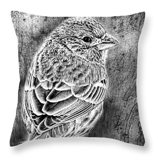 Nature Throw Pillow featuring the photograph Finch Grungy Black And White by Debbie Portwood