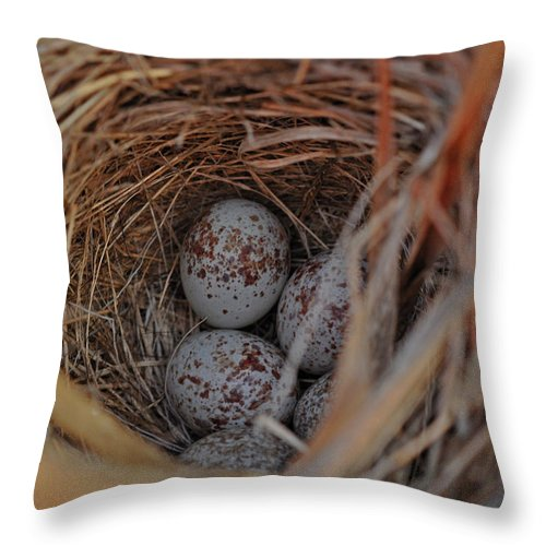 Birds Throw Pillow featuring the photograph Finch Nest With Eggs by Brittany Horton