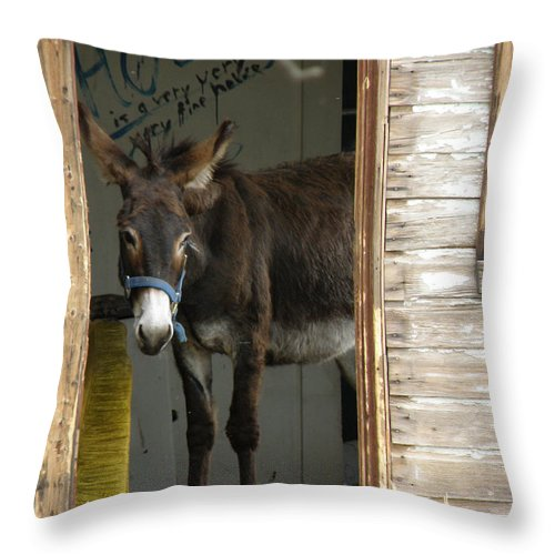 Donkey Throw Pillow featuring the photograph Fine House by FeVa Fotos