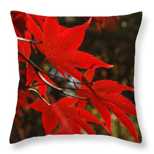 Leaves Throw Pillow featuring the photograph Finer Points Of Red by Trish Hale