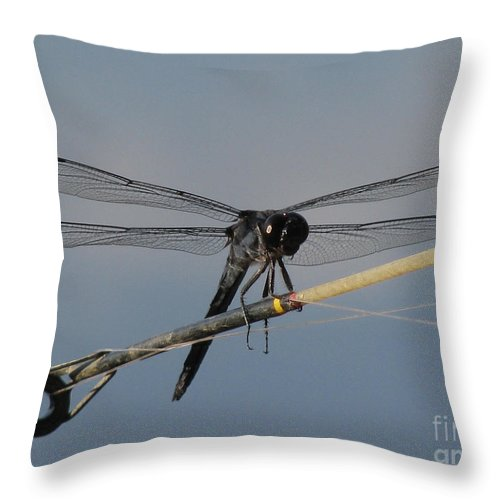 Insect Throw Pillow featuring the photograph Fishing Bubby by Donna Brown